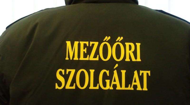 mezoor